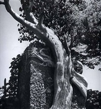old tree at the hacienda of bill sprattling near taxco by fritz henle