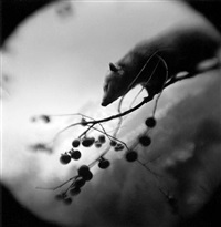 opposum on branch by keith carter