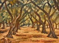 an old olive grove by arieh allweil