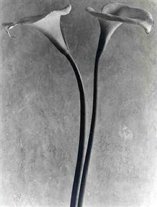 tina modotti edward weston the mexico years by tina modotti