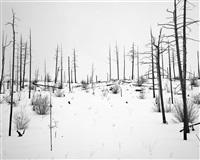 Night + Fog (Monchegorsk) (8), 2007