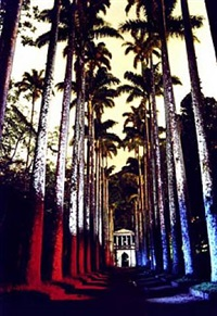 jardim botanico by renan cepeda