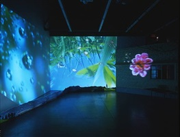 herbstzeitlose (saffron flower or fall time less) by pipilotti rist