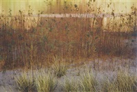 tamarisk and grass, rivers edge, glen canyon, august by eliot porter