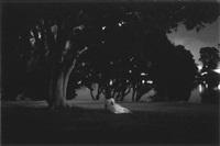 La Sonnambula #3, 2004