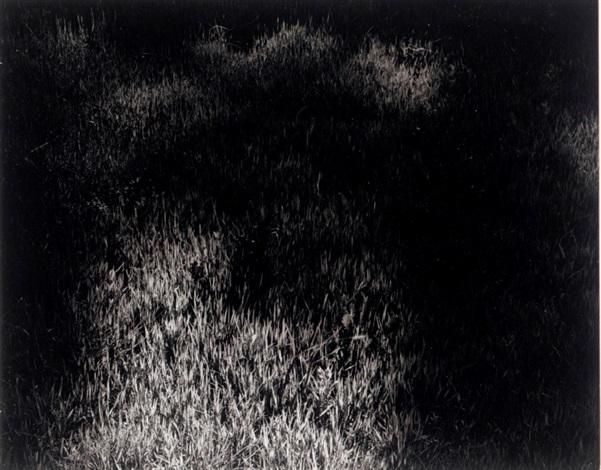 Harry Callahan - Artists - Laurence Miller Gallery