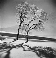 trees in snow, st. moritz by alfred eisenstaedt