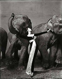 dovima by richard avedon