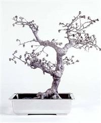 <!--50-->ehretia buxifolia by rona pondick