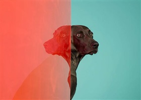 ethiopia by william wegman