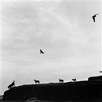 perros perdidos, rafasthan, india by graciela iturbide