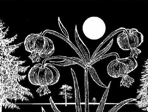 black dahlias by paul morrison