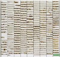 coccinellidae inserenda – determinanda by margret weber-unger