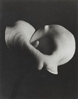 calla lily by marjorie content