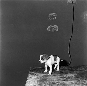puppy on table by roger ballen