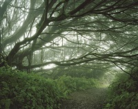 mist shrouded trees, ascension island by simon norfolk