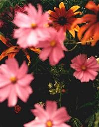fleur #38 by sally apfelbaum
