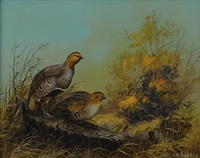 quail by ted blaylock