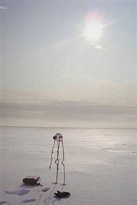 noorpool - arlikoop by panamarenko