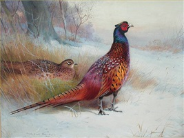 old english pheasant by archibald thorburn