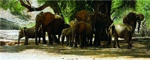 elephants taking shade by tony karpinski
