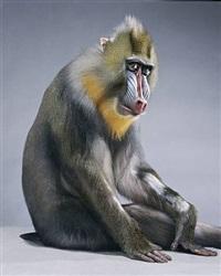 monkeysuit by jill greenberg