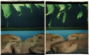 river bank by william wegman