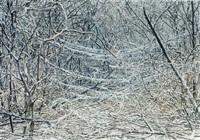 icestorm by sonja braas