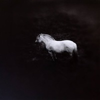 norwegian pony by keith carter