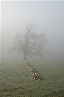 tame buzzard line by richard long