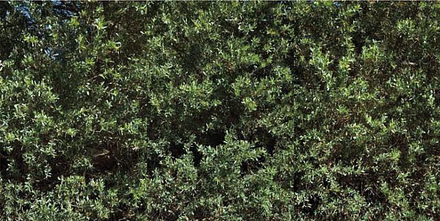 hedge by dale kistemaker