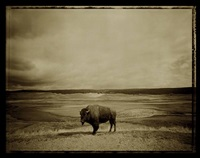 buffalo by david michael kennedy