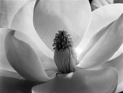 our twentieth anniversary 1992-2012 by imogen cunningham