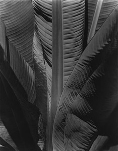 15th anniversary show group f.64 and their circle by imogen cunningham
