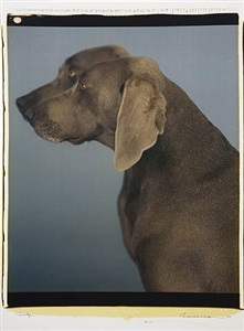 encounters by william wegman