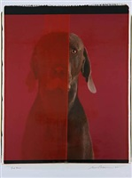 red room by william wegman