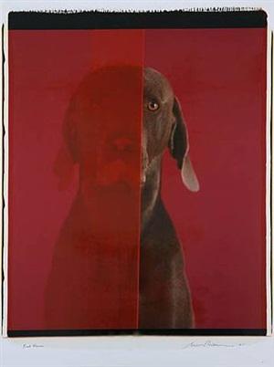 red room by william wegman