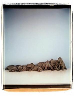 untitled (puppies) by william wegman