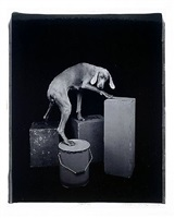 pedestals by william wegman