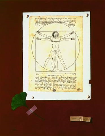 homage to vitruvius by judith cherry