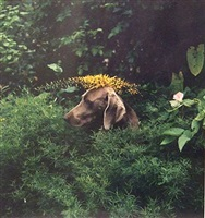 flora in fauna by william wegman