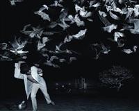 running from birds by tim white-sobieski
