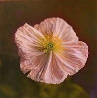 poppy by kate breakey