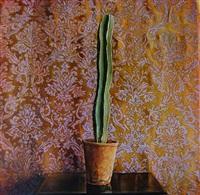 cactus 2 by kate breakey