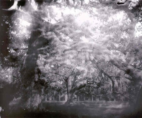 untitled (deep south #31) by sally mann