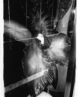 "orchid (from the series: a portfolio commissioned by ""hysteric,"" tokyo, 1996) by daido moriyama"