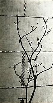 modernist tree study against a riveted metal tank by andré kertész