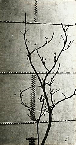 modernist tree study against a riveted metal tank by andré kertész