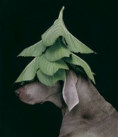 evergreen by william wegman