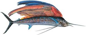 sailfishe by james prosek
